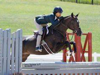 Royal Promise Pony for Sale