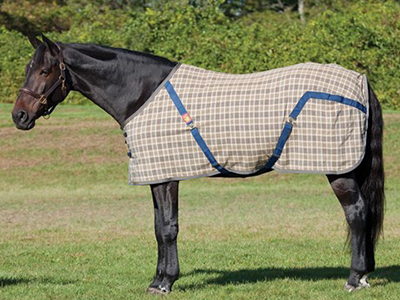 Horse wearing Baker sheet