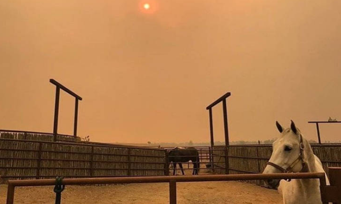 Horses in corral with smokey air