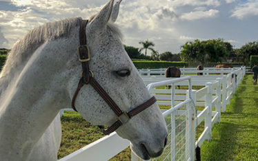 Cargo in Florida paddock