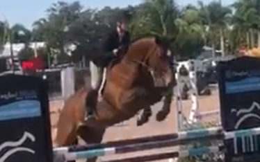 Donatello Equitation Horse for Sale