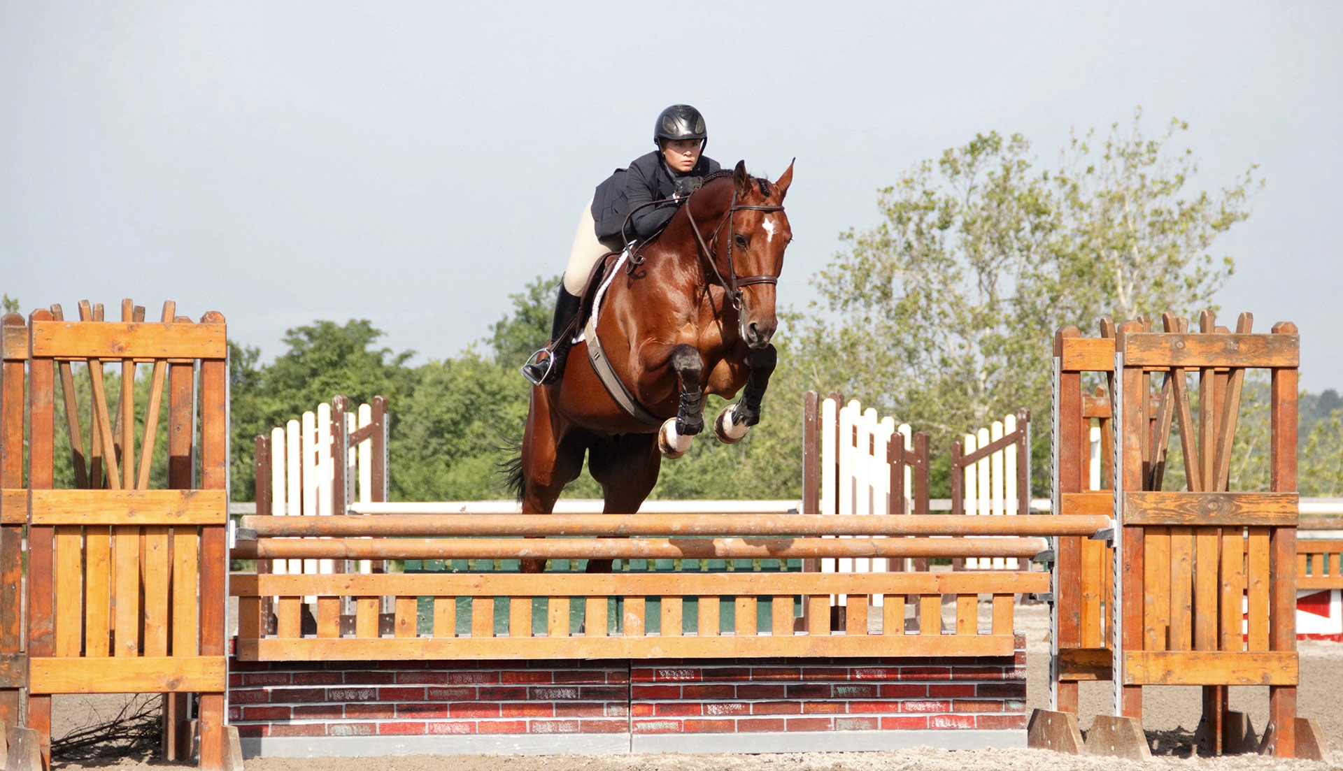 Shenanigans Equitation Horse