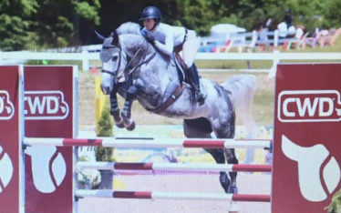 Rockefeller Z horse for sale