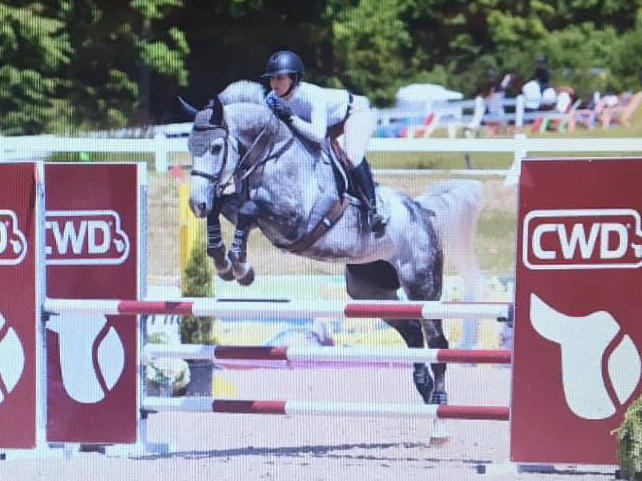 Rockefeller Z horse for sale