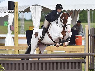 Bandit Z equitation horse
