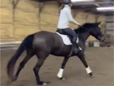 Jenny 2016 mare for sale